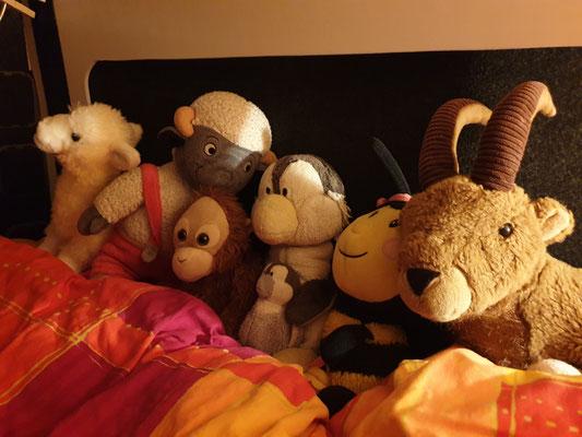 Cristina's Plüschfamilie 😍