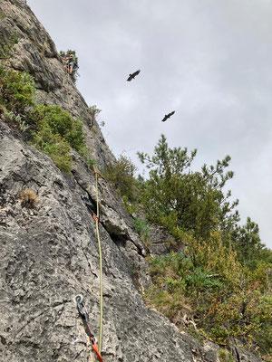 Klettern la Jonte