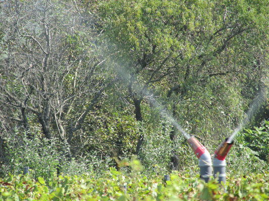 spraying horn silica 501