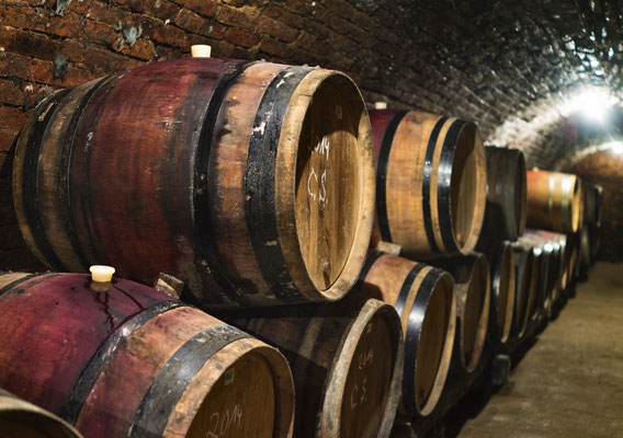 wassmann natural earth cellar with barrels