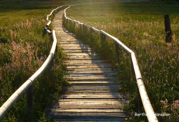 Schopflocher Moor - ein Naturdenkmal