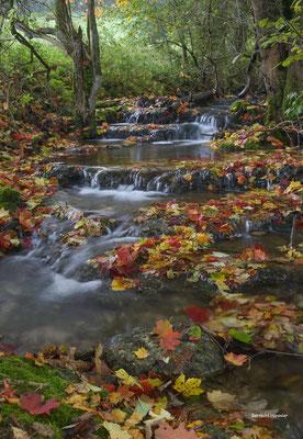 Herbstlicher Bachlauf bei Bad Ditzenbach