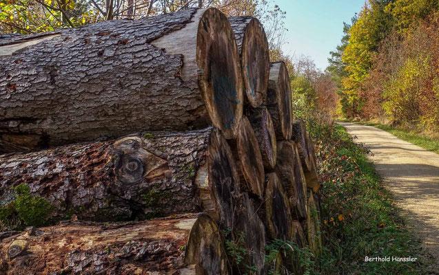 November 2020, Wald bei Schlat