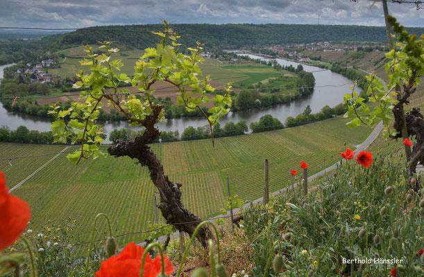 April 2020, Baden-Württemberg, Neckartal bei Mundelsheim