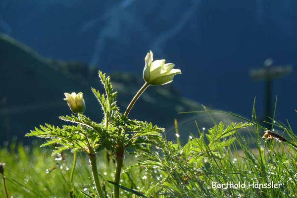 Dolomiten - Am Sellajoch