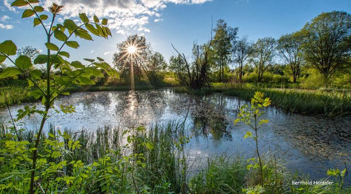 Mai 2021, Naturschutzgebiet in der Nähe von Grünenberg