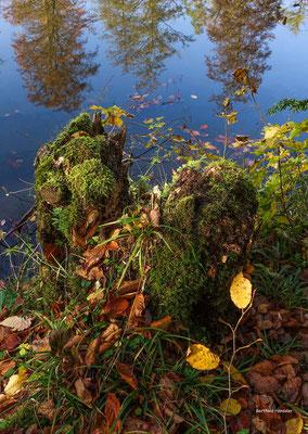 November 2020, See im Wald bei Schlat
