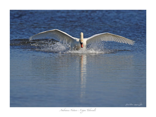 FS N° 1 cygne et diamants