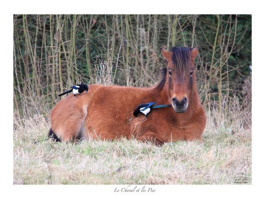 FS N° 12 cheval et pies nettoyeuses