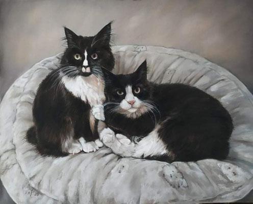 Katzen Pastellgemälde