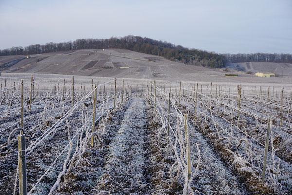 L'hiver dans le vignoble au Mesnil-sur-Oger - Côte des Blancs (proche Épernay)