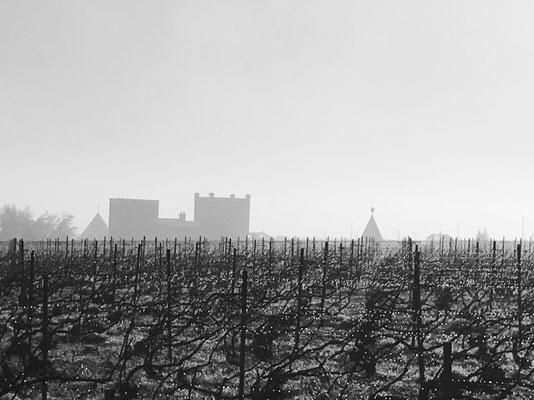 Dégel du vignoble du Mesnil-sur-Oger - Côte des Blancs (proche Épernay)