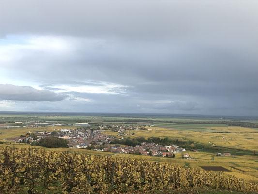 Paysage du vignoble champenois à Le-Mesnil-sur-Oger (Côte des Blancs, proche Épernay)