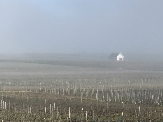 Fog over the vineyard at Le Mesnil-sur-Oger - Côte des Blancs (proche Épernay)