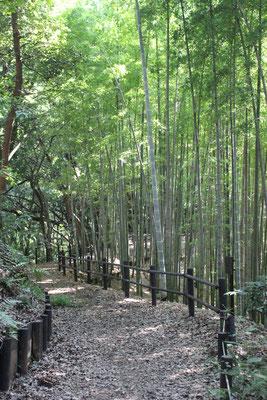 鴨池公園の竹林