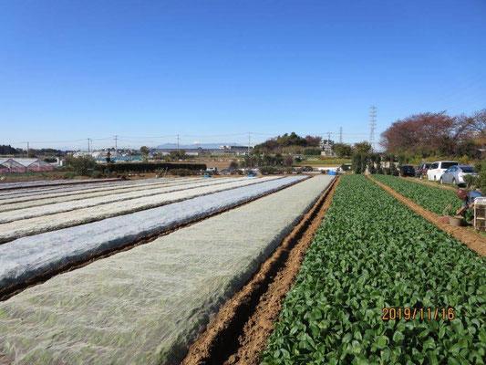 畑と池辺富士と富士
