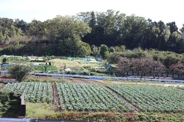 農業専用地区の市民農園