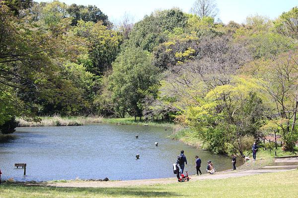 鴨池公園の池