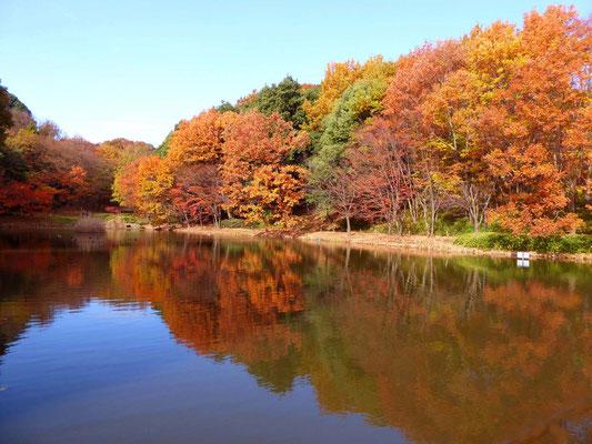 宮戸の大池