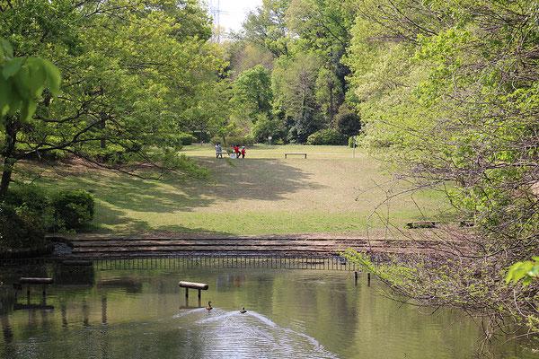 茅ヶ崎公園の池