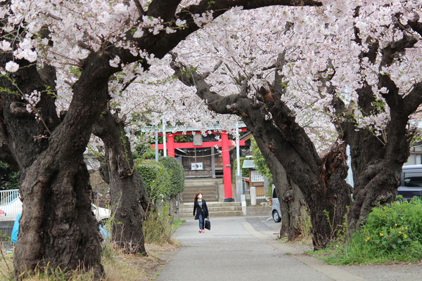 川和の八幡神社参道