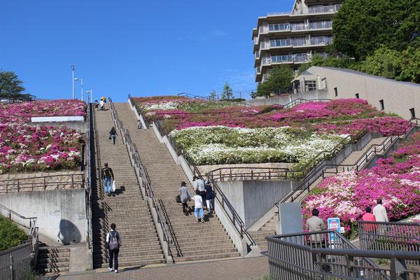 国際プール階段