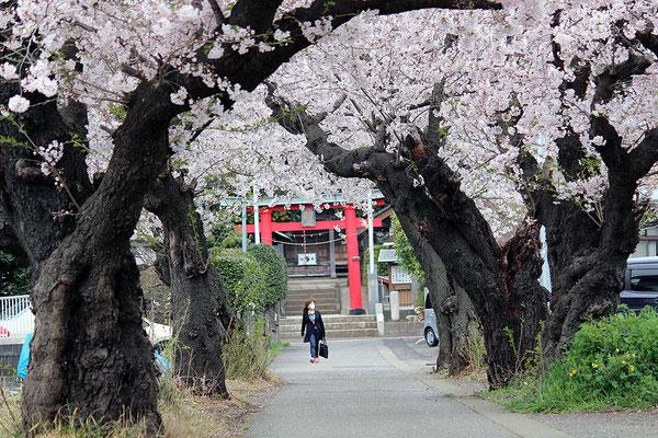 10.川和地区連合自治会 八幡神社の参道