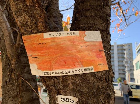 ふれあいの丘街路樹樹名板