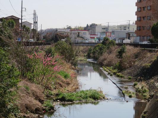早渕川鍛冶橋付近