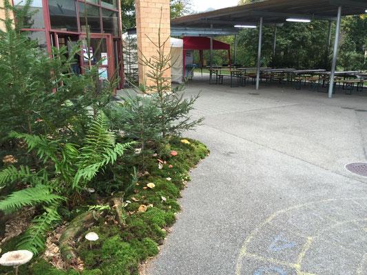 Der Eingangsbereich mit vielen eindrücklichen Pilzen!