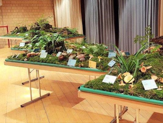 Alle Ausstellungstische sind mit Pilzen bestückt!
