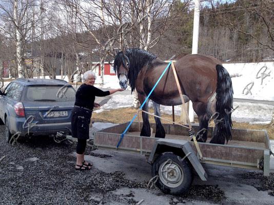 Dagny Eriksson tar emot hästen vid leveransen, hon döper den till Linda. Linda ska stå i det fristående stallet som är en del i hennes privata museum.  Hästen har jag sågat ut i plywood skiva och målat den med illusionsteknik