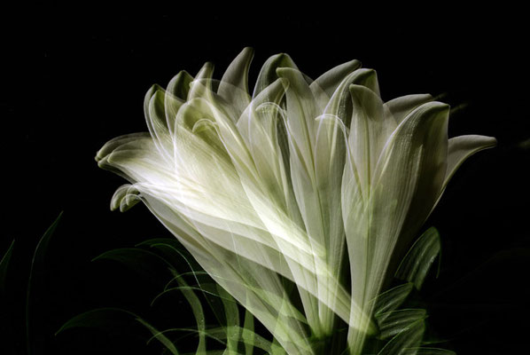 blossom #02