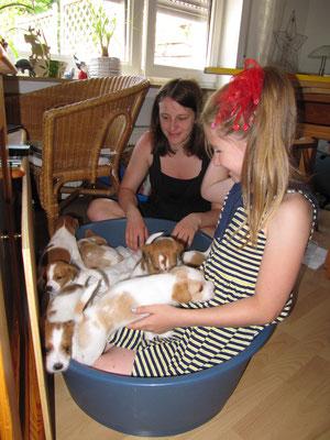 ...und hier mit der Schleife der größte Welpe im Hundekörbchen :-D
