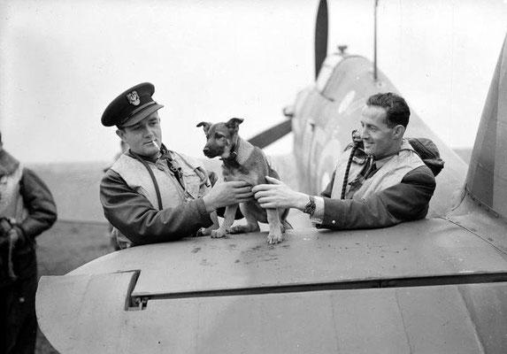 Pilotos del Escuadrón 303 jugando con la mascota del escuadrón, octubre de 1940.
