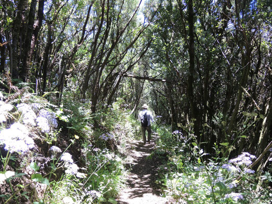 Wandern unter Lorbeerbäumen