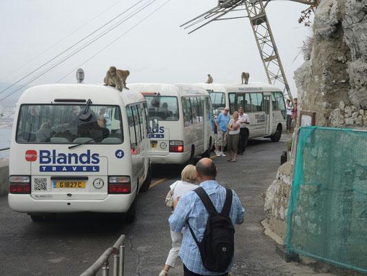 Auch die Busse wurden erobert