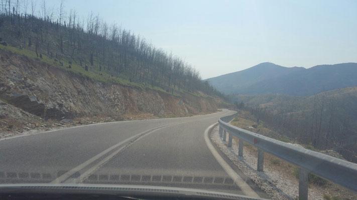 Auf riesigen Flächen hat ein Waldbrand gewütet