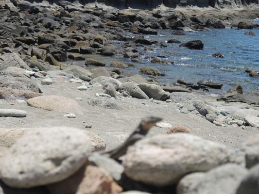 schöner Strand mit Eidechse