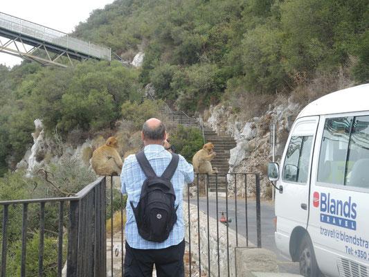 Drei Affen auf nur einem Bild...