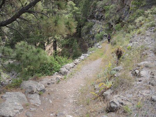 immer bergauf durch die Pinienwälder