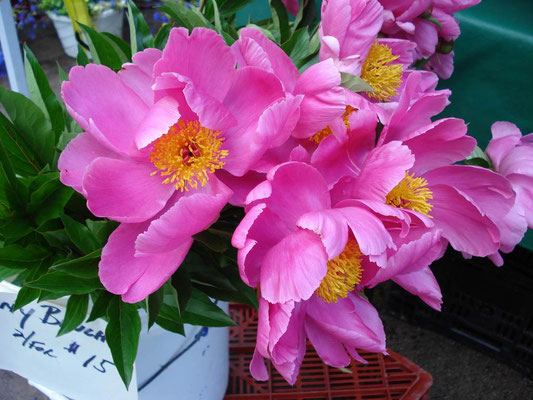 Peonies at the Boulder Farmer's Market Photo credit: Amy Mundinger