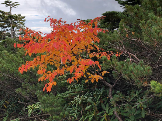 金峰山紅葉