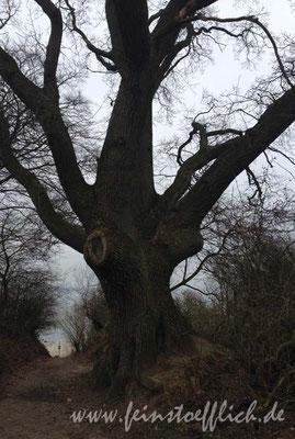 Der Baum wurde wohl von allen fotografiert