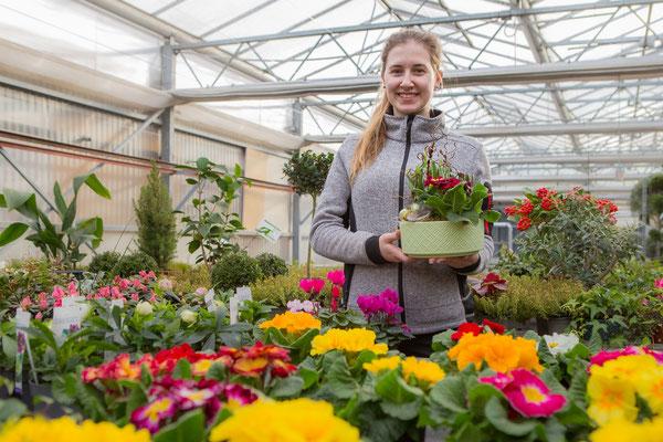 Blumen und Pflanzen kaufen und bestellen in Würzburg, Unterfranken, Mainfranken