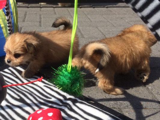 boomer pup kennel de twentsche weide heeft gevoel voor huisdieren