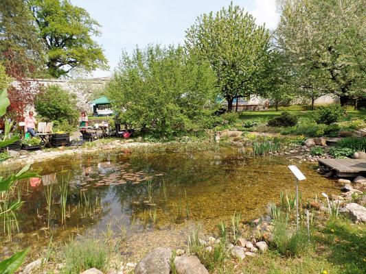 Teichanlage im Klostergarten St. Marienstern