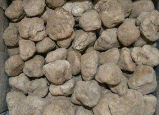 brown winter truffle