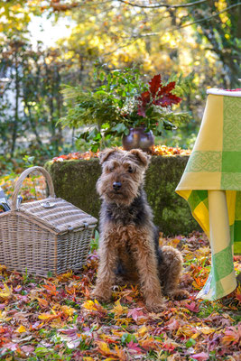 Gina, der Terrier #AltesForstamtimteutoburgerwald#