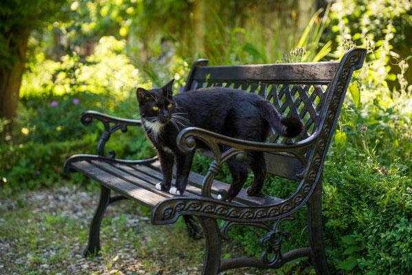 Katze Pitti - Altes Forstamt